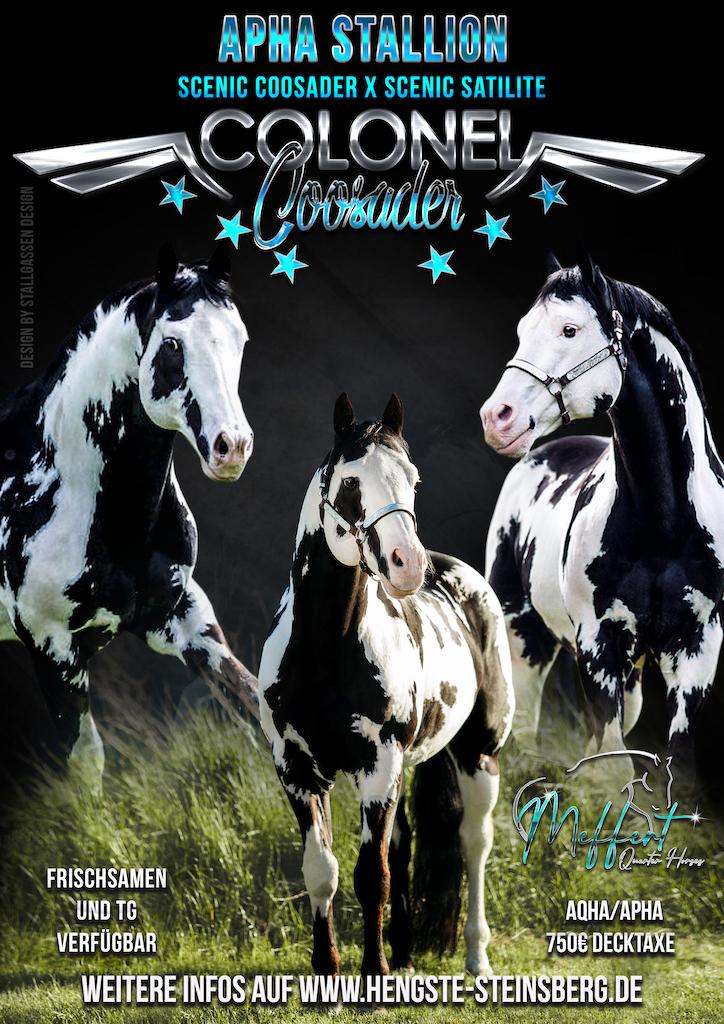 Stallion AD Colonel Coosader